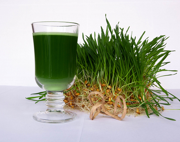 OPLEMENT - live juice sprouts and roots of young wheat (OPLEMENT - живой сок ростков и корней молодой пшеницы)